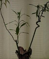 Planta 8.jpg