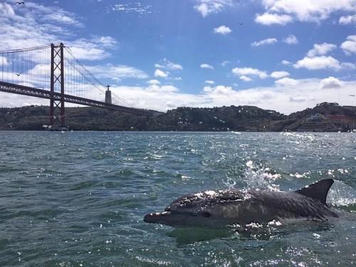 golfinhos2.jpg
