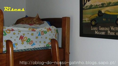 gato-no-alto.JPG