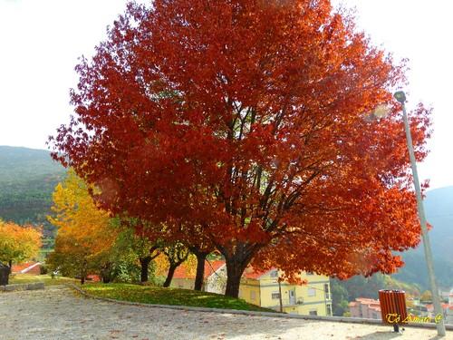 Fotos de Outono !!! 016.jpg