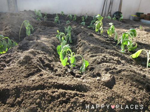 Agricultura1.4.jpg