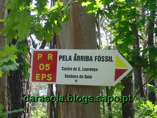Arriba_Fossil_Esposende_12.JPG