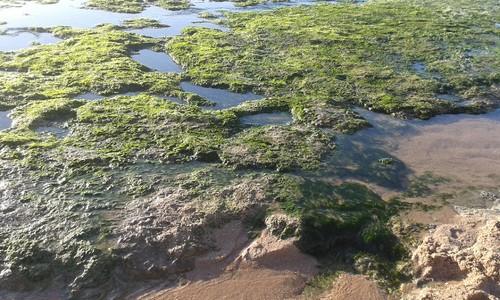 verde na praia.jpg