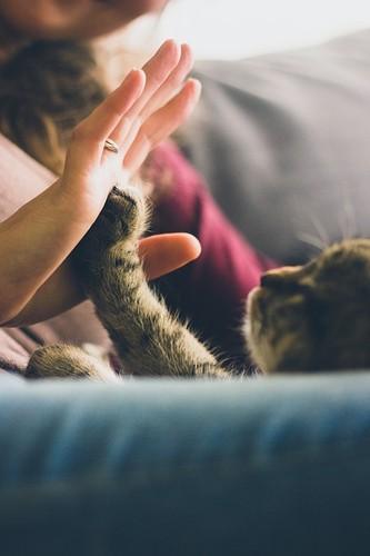 gato feliz.jpg