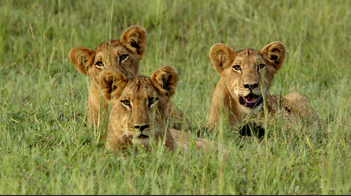 Cubs2.jpg