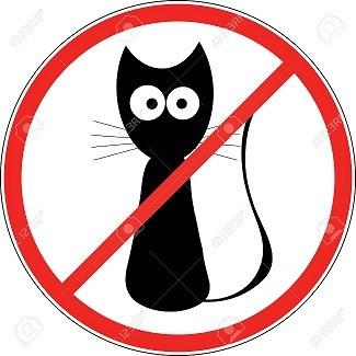 5735535-no-cats-Stock-Photo-no.jpg