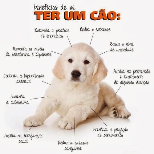 Beneficios dos Cães.JPG