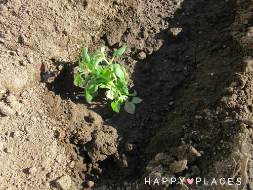 Agricultura1.5.jpg