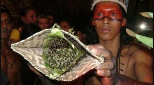 Formiga-Cabo-Verde-e-Luvas-entre-as-mais-bizarras-