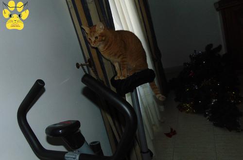 pinheiro-no-chão-gato-sentado.jpg