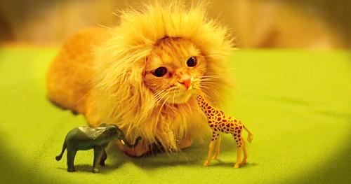 image_1419269733_jd_gv_ferocious_lion_FB.jpg