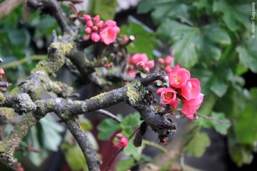 Primavera - Foto Helder Sequeira.jpg