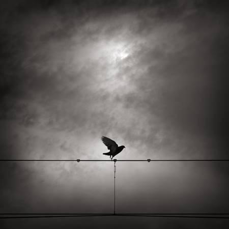 Alexandre Parrot.jpg