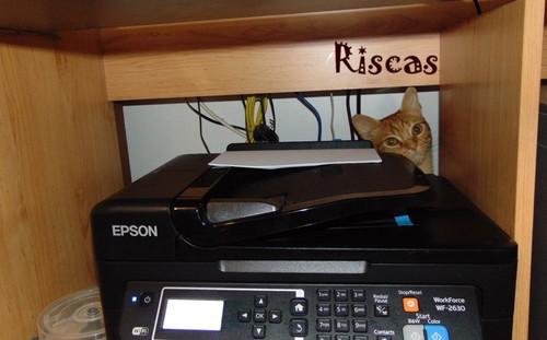 gatos-e-impressoras2.JPG