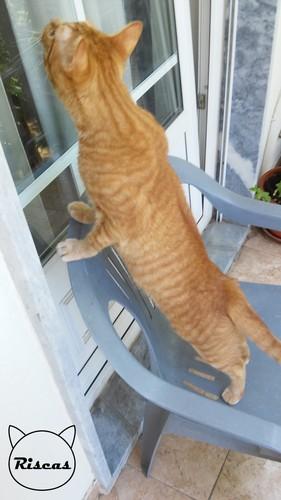 gatocusco.jpg