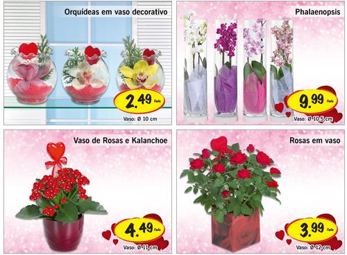Lidl flores e plantas sugest es para o dia da m e for Plantas de interior lidl