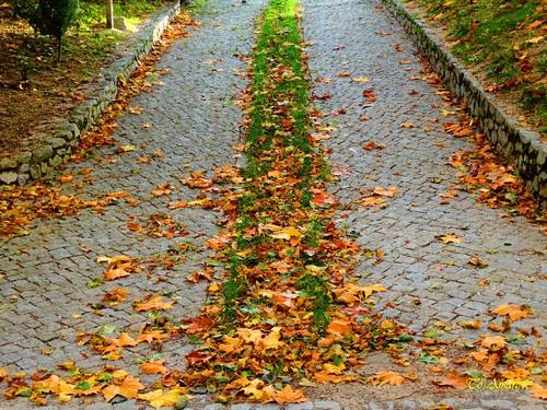Fotos de Outono !!! 073.jpg