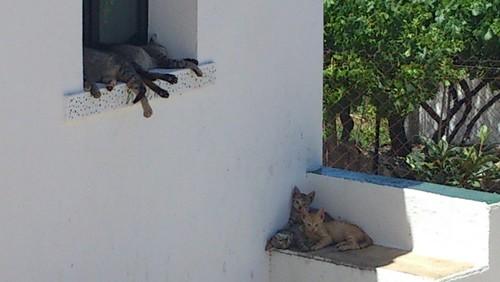 vida de gato.JPG