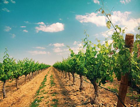 sector-vitivinícola.jpg