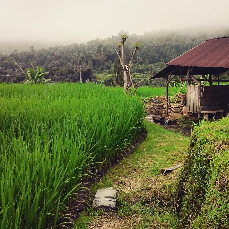 munduK_bali_indonesia.jpg