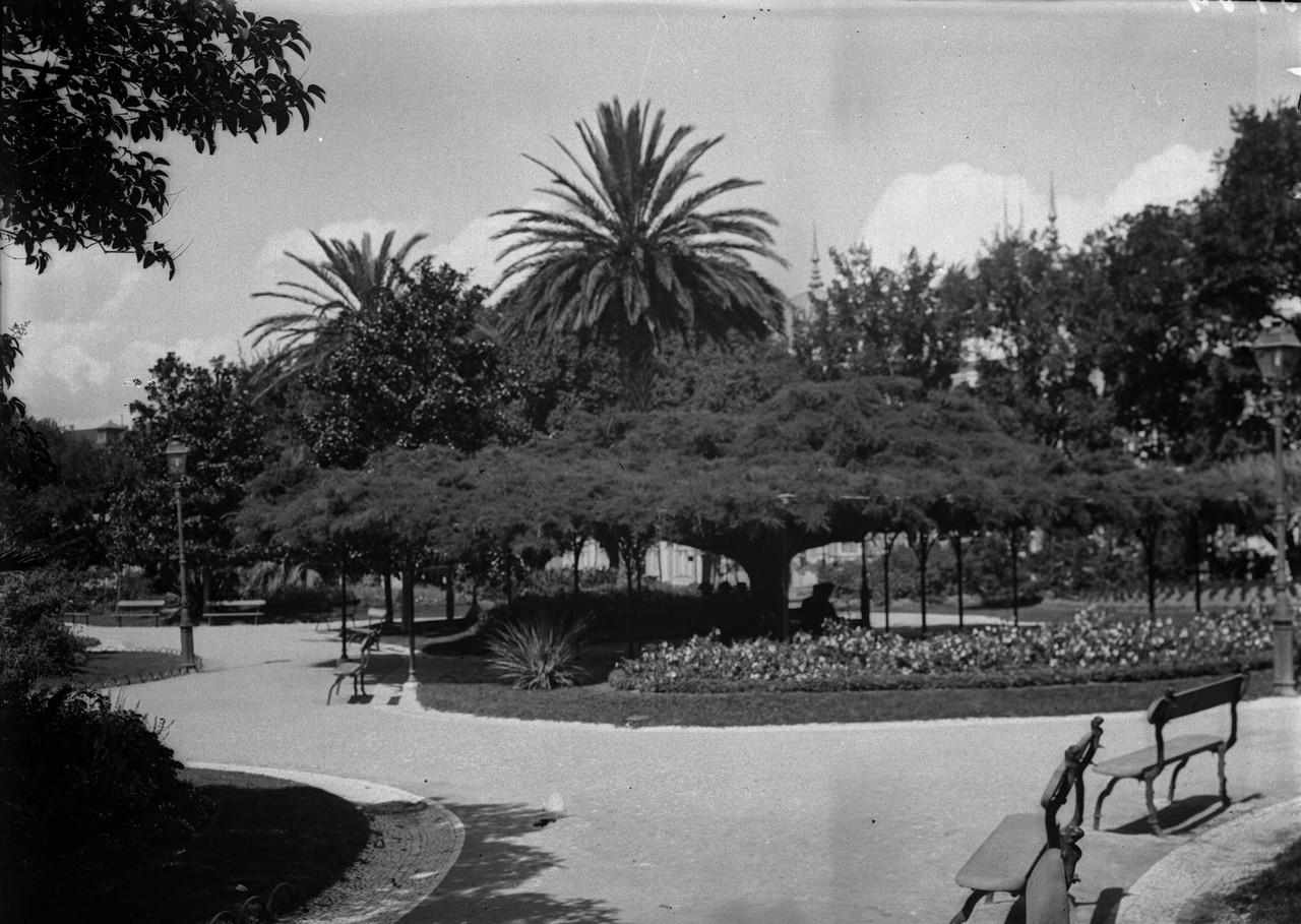 Jardim do Príncipe Real, o cedro,foto de Joshua B