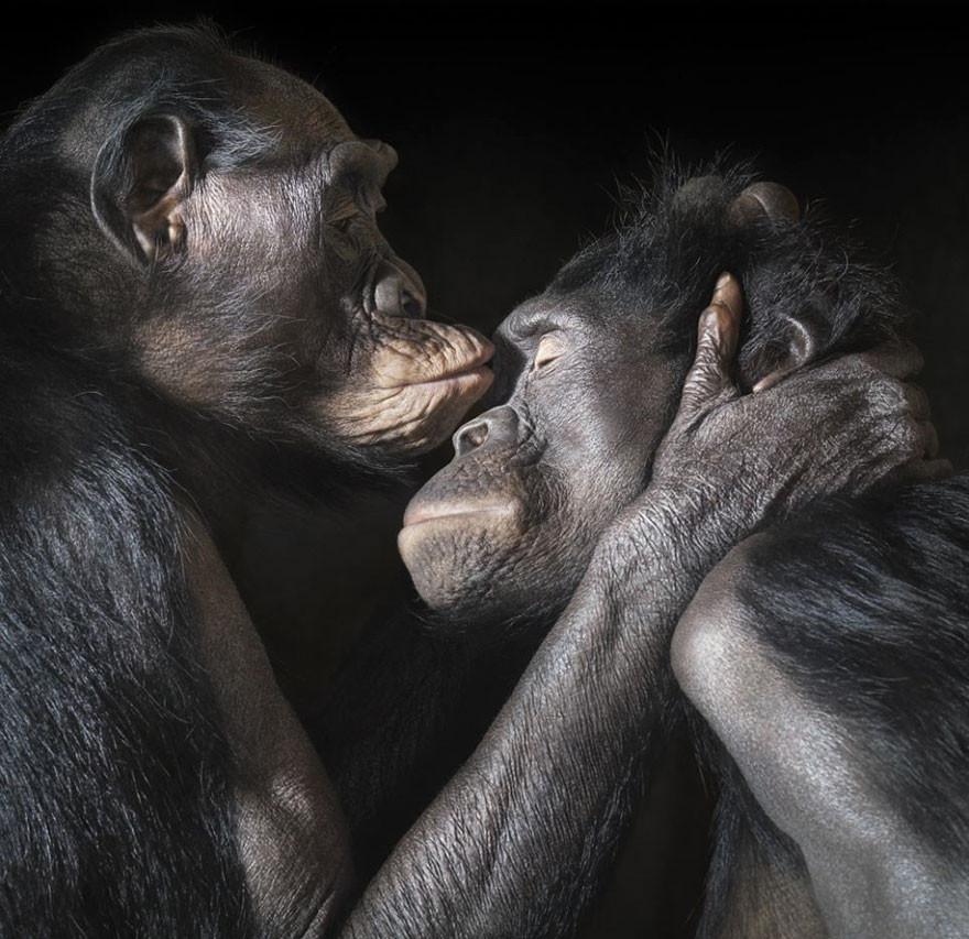 cute-animals-kissing-valentines-day-13__880.jpg