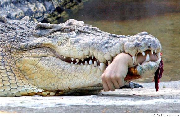 mn_croc_attack_xtpe801.jpg
