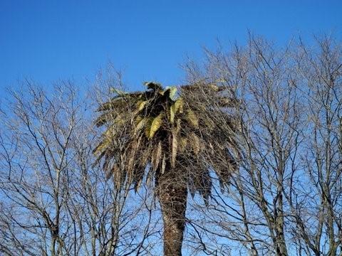 palmeira.jpg