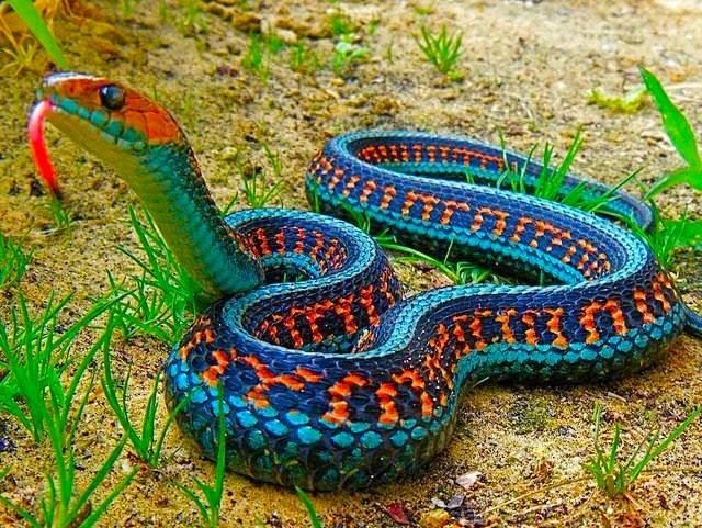 cobra colorida.jpg