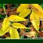 Folhas em ervas caídas