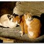 gatos[1].jpg
