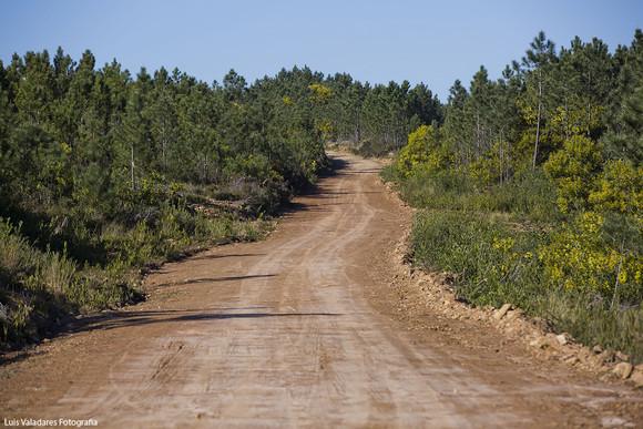 Caminhos florestais (2)