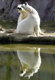 GERMANY POLAR BEARS WEATHER