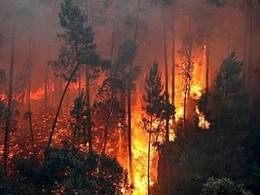 210712_Incendio-em-Portugal_0[1].jpg