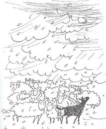 Elizabeth Shaw - A ovelhinha preta 14a.jpg