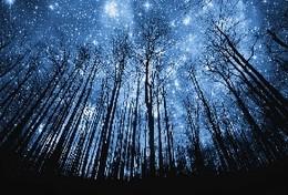 Brisa das estrelas.jpg