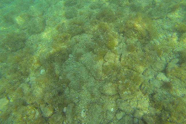 drasnice_snorkeling_02