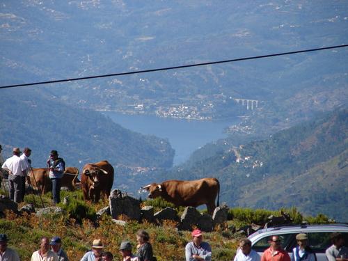 Serra Montemuro