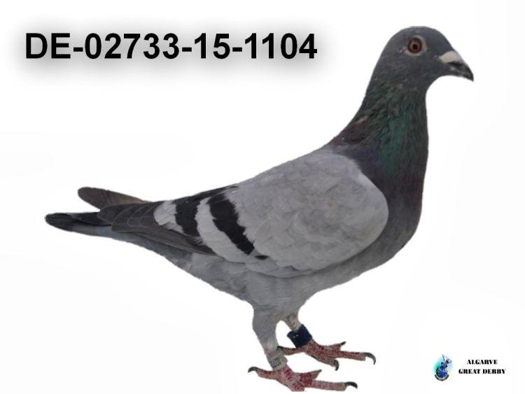 DE-02733-15-1104.jpg