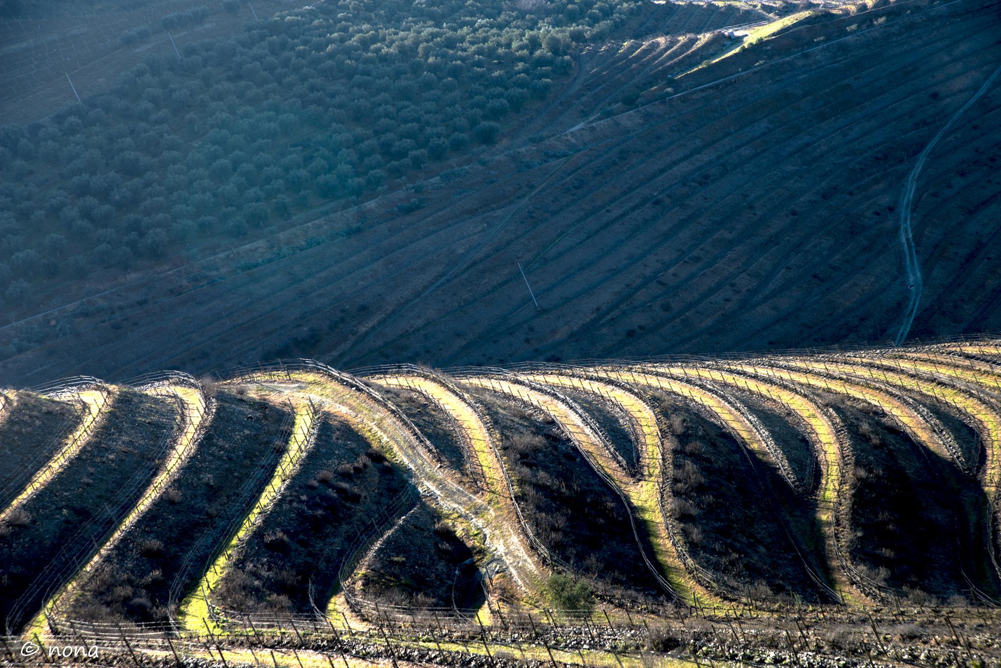 2015 - Rota das Amendoeiras (382).jpg