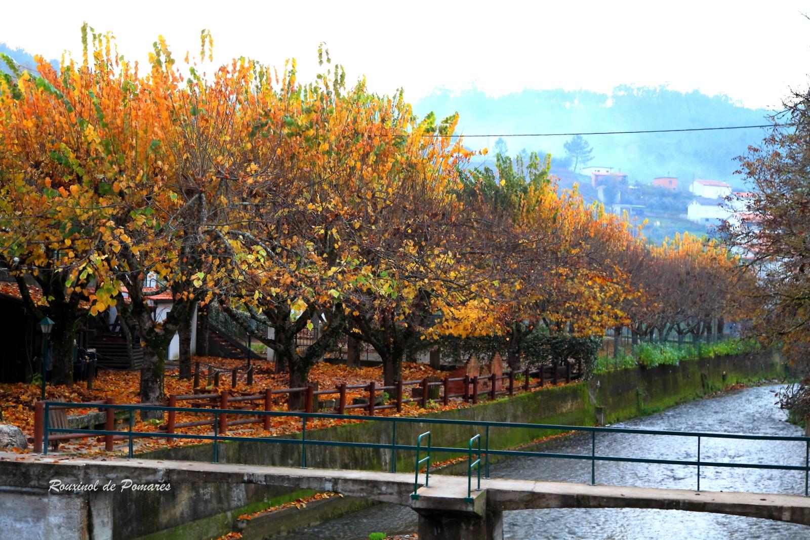 Outono em Pomares I (5)